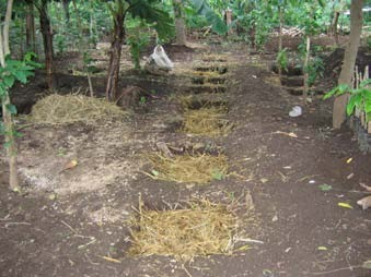 Figure 1: Holes in the ground, used for vermiculture at Rancho Ebenezer in Nicaragua.