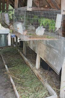 Figure 8: Worm bed below rabbit cages at ECHO. Photo by Tim Motis