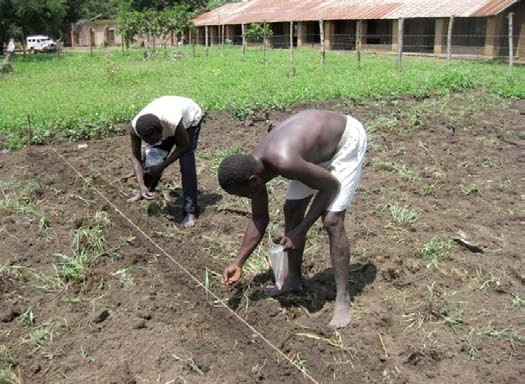 Two African man planting seeds