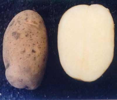 Zolushka.' Photo from Potato Products International, Ltd.