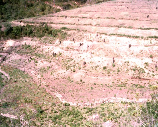 Figure 1. The techniques associated with the Nutrient Access Concept can result in dramatic changes. Above is a bare, eroding piece of land. To the right is the same piece of land only two years later. Photos from Roland Bunch.