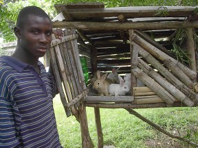 Figure 1. A rabbit cage made out of locally available materials. Photo by Wayne Niles.