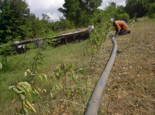 Figure 5. Layflat hose being used for irrigation. Portable chicken cages are visible in the background. Photo by Wayne Niles.
