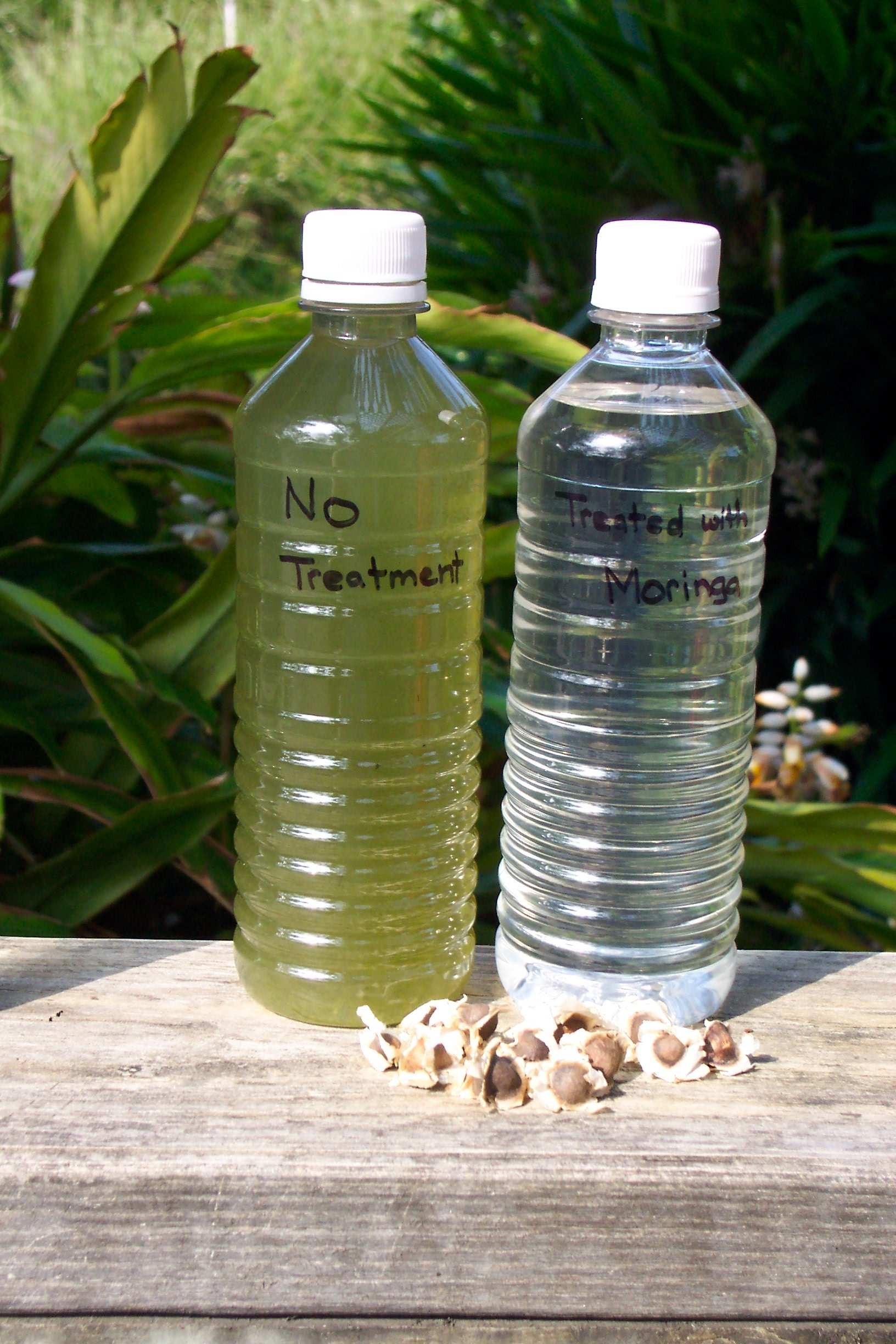 Figure 2: On the left is a bottle containing turbid water. On the right is a bottle containing water from the same source that has been clarified using moringa seeds.