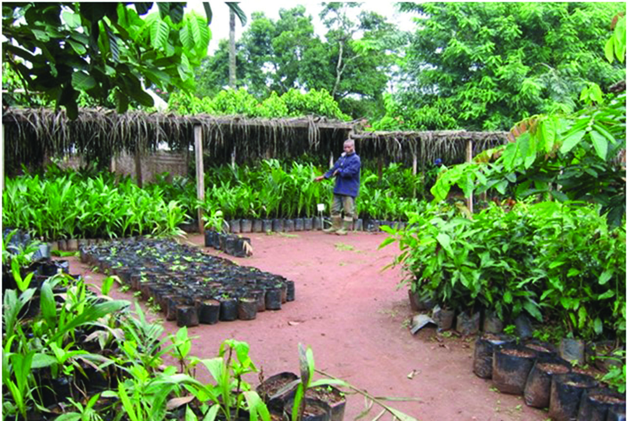A well-stocked fruit tree nursery at the center.