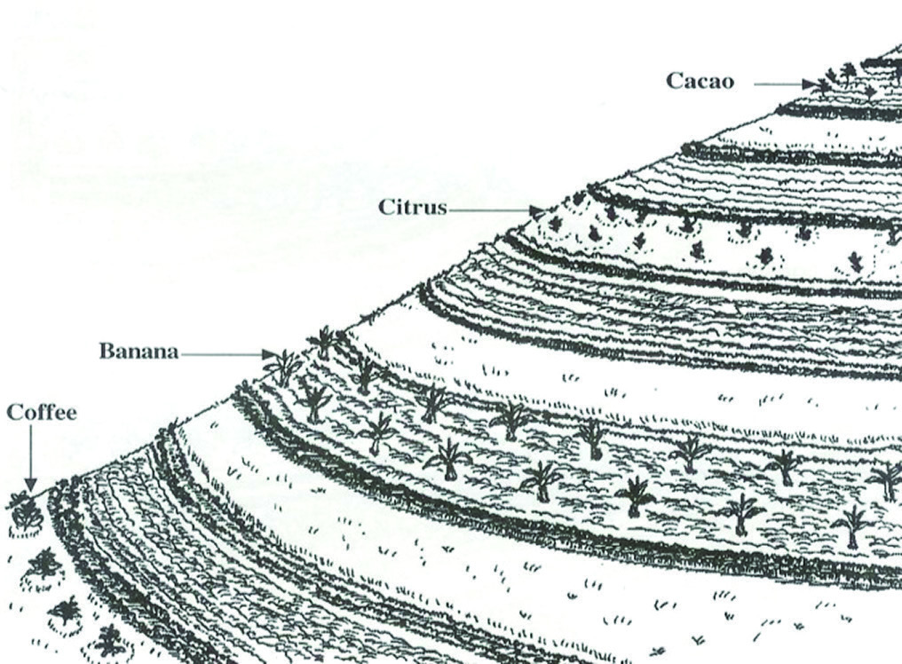 Figure 6:  Permanent crops planted in every third strip