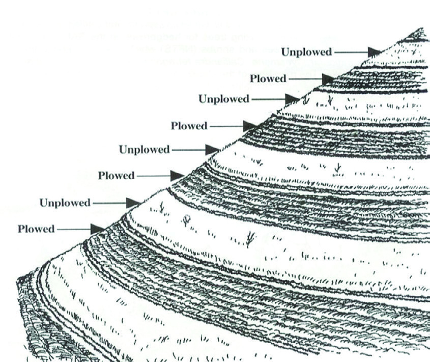 Figure 5:  Alternating plowed and unplowed strips.