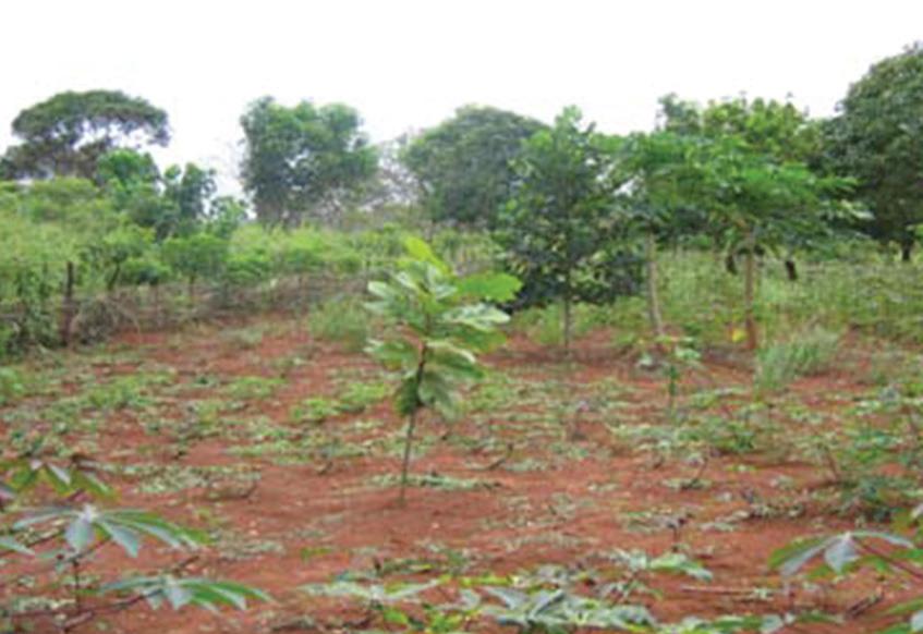 Central African Tree Garden