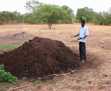 Figure 4.  Compost pile for use in zai pits.  Photo courtesy of Hamado Sawadogo.