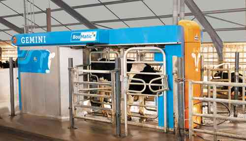 The 5 major advantages of milking between the hind legs in a milking robot!