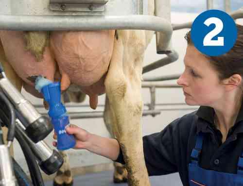 Een optimale voorbehandeling tijdens het melkproces in 7 stappen