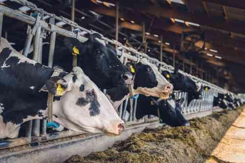 Les 6 besoins interdépendants de la vache