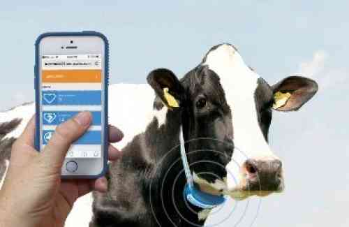 Why Invest in Cow Monitoring?