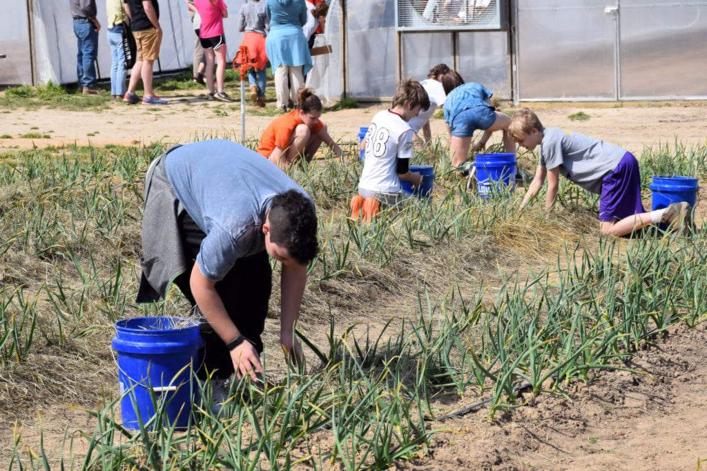 PYM Day of Service 2017 at Shalom Farms