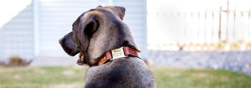 ScruffTag Personalized Dog Collar