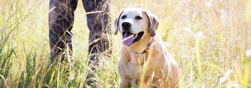Hunting Dog Collars