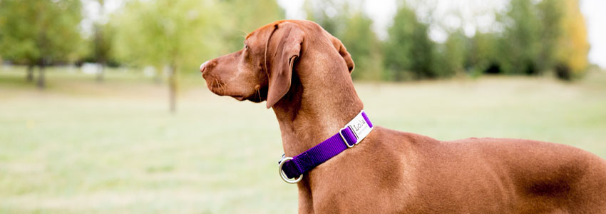 Slide On Dog Collar Nameplate