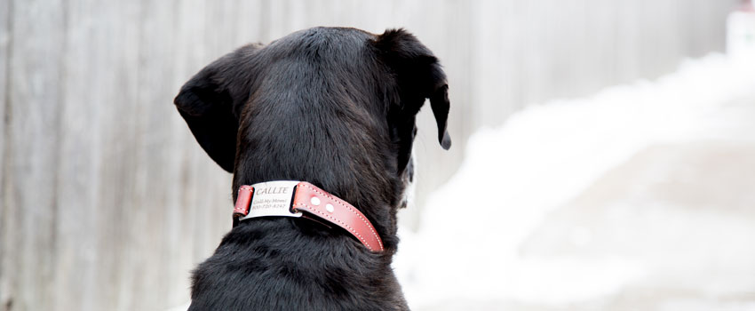 Leather ScruffTag Dog Collar