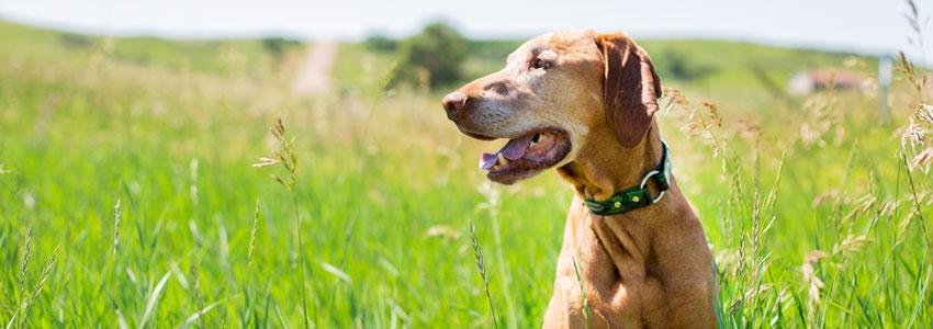 Safety Dog Collar on Dog