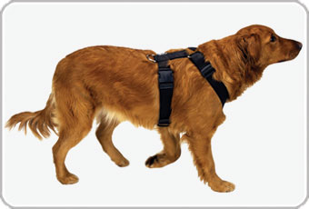 Shop Dog Harnesses from dogIDs.