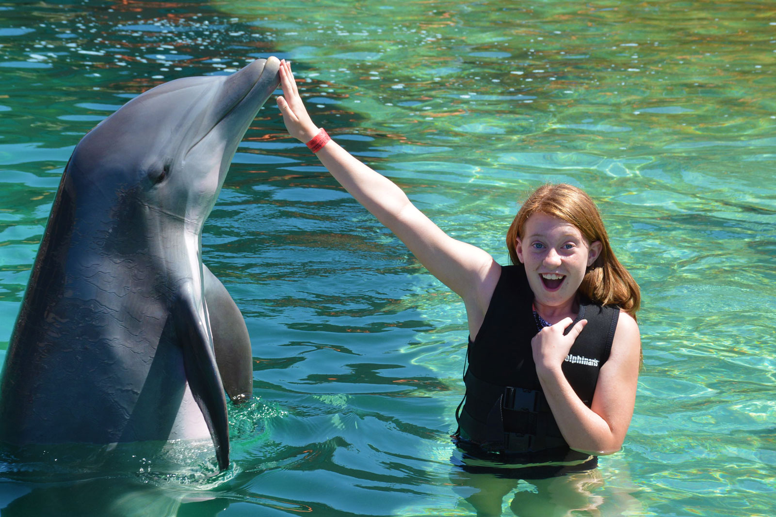 2018 Summer Camps for Kids in Phoenix-Scottsdale – Dolphin Explorer – Dolphinaris AZ