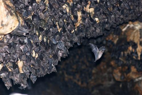 Bat Cave - Actividad al aire libre en Phoenix
