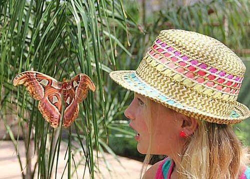 Butterfly Wonderland -Phoenix Activities