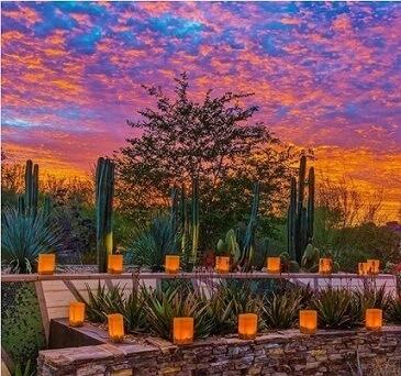 Jardín Botánico del Desierto: qué hacer en Phoenix