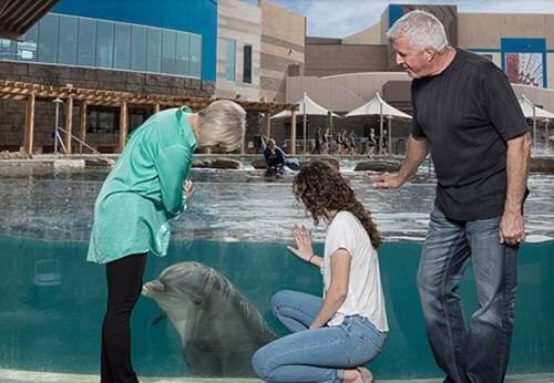 Dolphinaris Arizona-Things to do in Phoenix