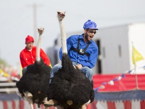 Ostrich Race at Chandler -Things to do in Phoenix for Families