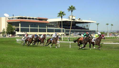 Turf Paradise Race Course -Things to do in Phoenix for Families