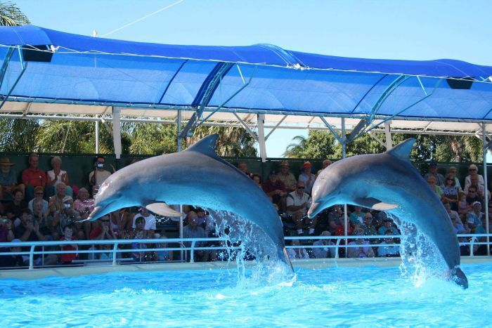 Dolphin Marine Magic - One of the Best Places to Swim with Dolphins in the World