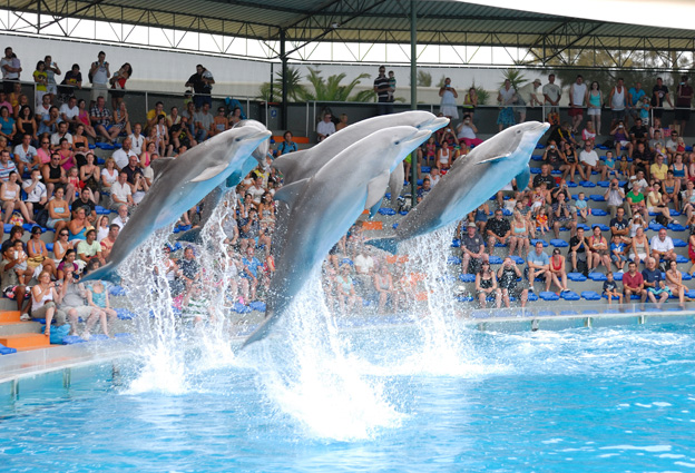 Zoomarine - One of the Best Places to Swim with Dolphins in the World