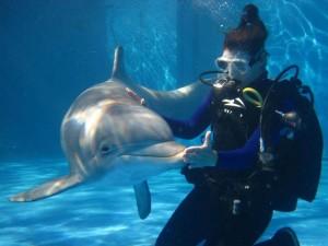 amhmar-dolphins-swim-in-cancun