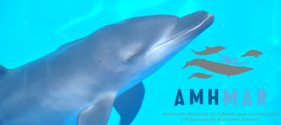 Nado con delfines en Cancún AMHMAR