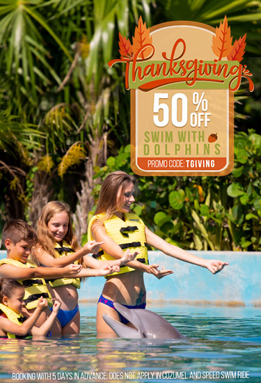 Thanksgiving deal swimming with dolphins in Cancun, Riviera Maya, and Tulum.