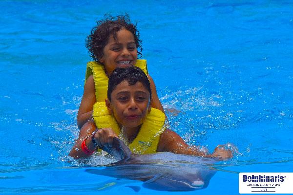5 mejores lugares para delfín nada en la riviera maya y tulum