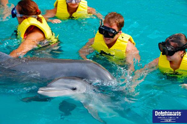 5 mejores lugares para delfín nada en la riviera maya y cancun