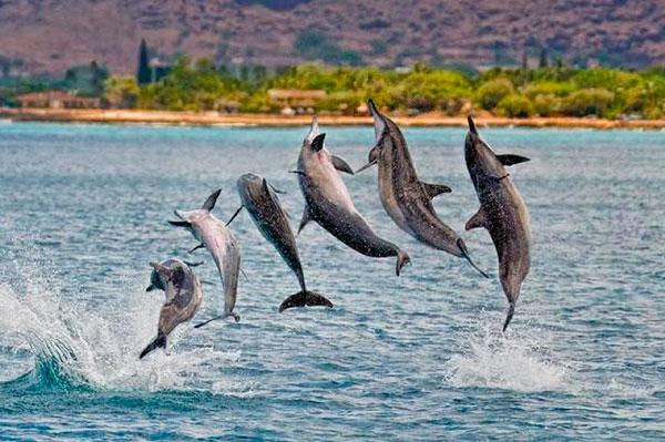 9 Tipos increíbles de delfines en México - Delfín Girador