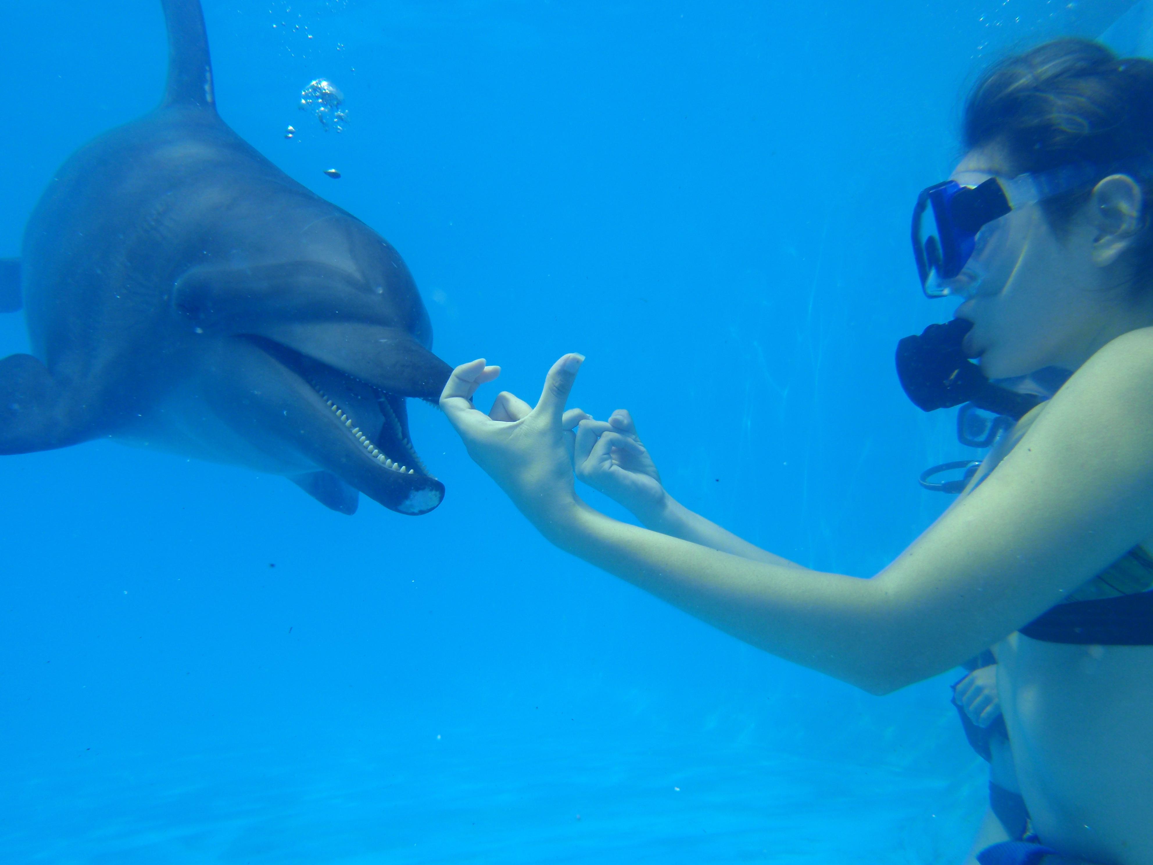 Descubre las características del comportamiento de los delfines en este artículo de Dolphinaris