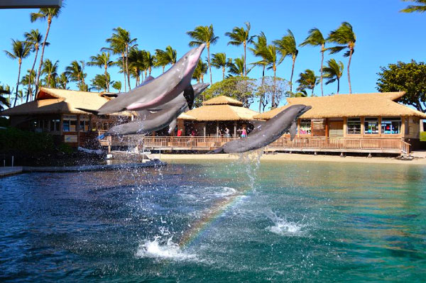 best-places-to-swim-with-dolphins-in-the-world-[dolphin-quest]