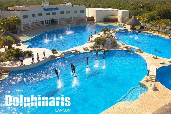 best places to swim with dolphins in the world [dolphinaris cancun]