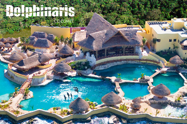 best places to swim with dolphins in the world [dolphinaris cozumel]