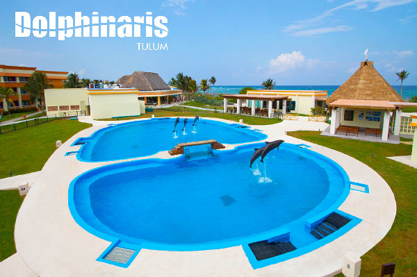 best places to swim with dolphins in the world [dolphinaris tulum]