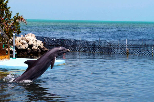 best-places-to-swim-with-dolphins-in-the-world-[research]