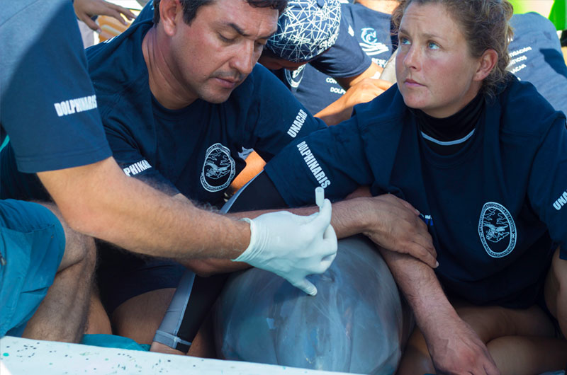 dolphinaris-foundation-conservation-health-assessment-project-on-free-ranging-dolphins