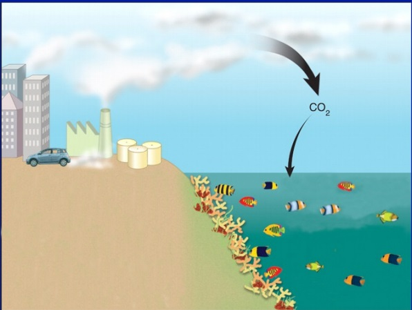 ocean acification diagram-Consequences to Ocean Acidification - Dolphinaris in Cozumel