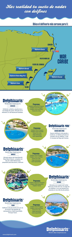 Nadar con delfines en la Riviera Maya es muy simple