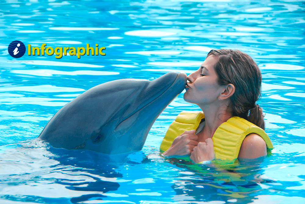Swim with the Dolphins Swimming With Dolphins on swimming dolphin game, funny dolphins, feeding dolphins, types of dolphins, red dolphins, cute dolphins, dolphin facts, pictures of dolphins, whales and dolphins, swimming pool, swimming w dolphins, real dolphins, there are really killer dolphins, kissing dolphins, swimming penguins, pod of dolphins, dreaming of dolphins, purple dolphins, bottlenose dolphin, women and dolphins, what's the difference porpoises and dolphins, discovery cove dolphins, florida dolphins, dolphin gifts, baby dolphins,