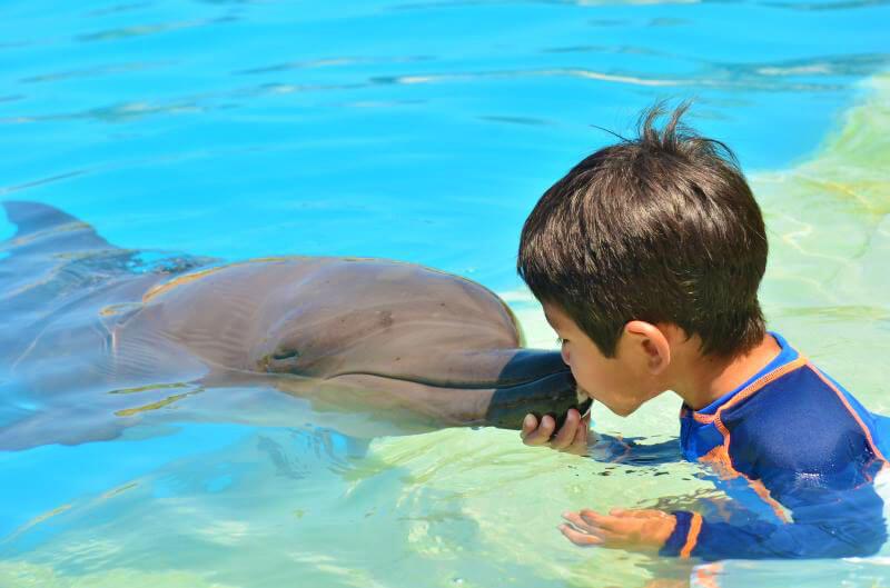 Programa de interacción con delfines.